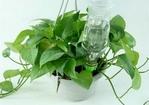 创意手工 矿泉水瓶制作自动浇花器图片
